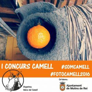 cartell-concurs-instagram-2016
